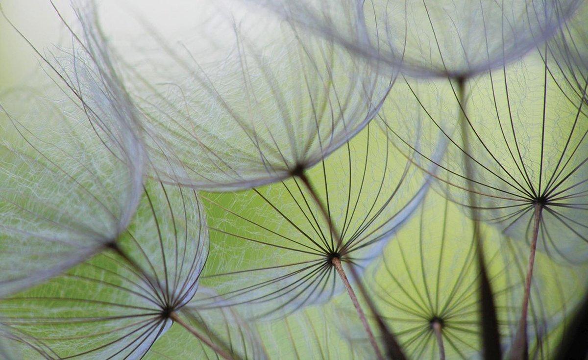 Green   Gray Photomural, wallcovering - GroepArt