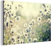 Witte bloemen in veld Aluminium 90x60 cm - Foto print op Aluminium (metaal wanddecoratie)