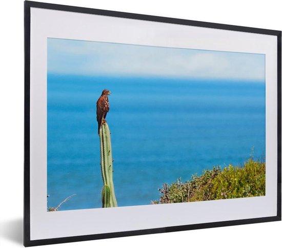 Foto in lijst - Valk op een cactus bij het strand fotolijst zwart met witte passe-partout klein 40x30 cm - Poster in lijst (Wanddecoratie woonkamer / slaapkamer)