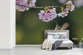 Fotobehang vinyl - Kolibrie zwevend onder kersenbloesems breedte 390 cm x hoogte 260 cm - Foto print op behang (in 7 formaten beschikbaar)