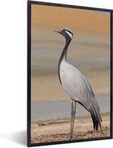 Foto in lijst - Close-up van een jufferkraanvogel fotolijst zwart 40x60 cm - Poster in lijst (Wanddecoratie woonkamer / slaapkamer)