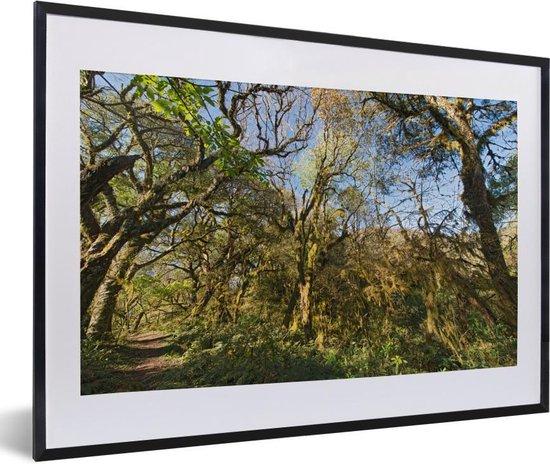 Poster met lijst Nationaal park Calilegua - De jungle in het nationaal park Calilegua met helderblauwe lucht in Argentinië fotolijst zwart met witte passe-partout - fotolijst zwart - 60x40 cm - Poster met lijst