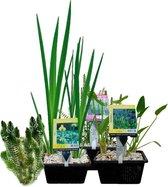 Waterworld Vijverplanten Pakket Mini Vijver - voor 0,5-1 m³ water