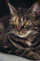 Fierce Cat