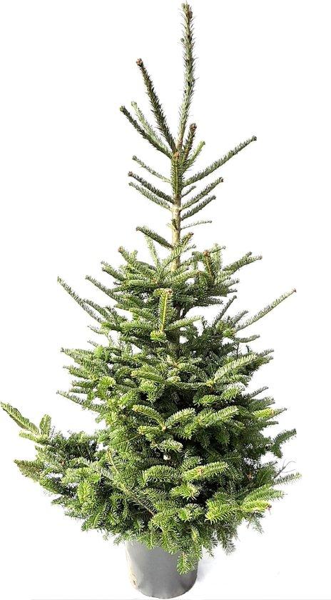 Plant&More - Fraseri Kerstboom 130-140 cm