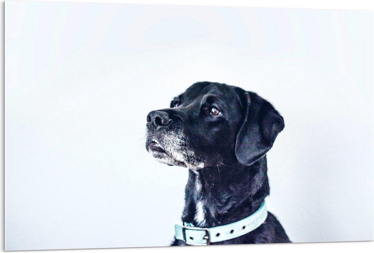 Plexiglas - Hoofd van Zwarte Hond op Witte Achtergrond - 120x80cm Foto op Plexiglas (Wanddecoratie op Plexiglas)
