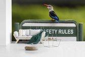 Grijskopijsvogel op bordje van veiligheidsregels fotobehang vinyl breedte 605 cm x hoogte 340 cm - Foto print op behang (in 7 formaten beschikbaar)