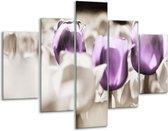 Glasschilderij Tulpen | Paars, Grijs, Wit | 100x70cm 5Luik | Foto print op Glas |  F002771