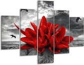 Glasschilderij Lelie   Rood, Grijs   100x70cm 5Luik   Foto print op Glas    F005871