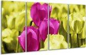 Glasschilderij Tulp | Roze, Groen, Wit | 160x80cm 4Luik | Foto print op Glas |  F003727