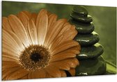 Glasschilderij Bloem | Wit, Bruin, Groen | 120x70cm 1Luik | Foto print op Glas |  F002585