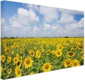 Zonnebloemen veld  Canvas 120x80 cm - Foto print op Canvas schilderij (Wanddecoratie woonkamer / slaapkamer) / Bloemen Canvas Schilderijen