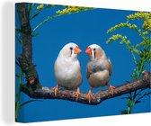Blauwe hemel boven de Zebravinken Canvas 140x90 cm - Foto print op Canvas schilderij (Wanddecoratie woonkamer / slaapkamer)