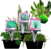 Waterworld Combi Zuurstofplanten Pakket - voor 5 m³ Water