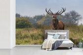 Behang - Fotobehang - Mannelijk hert in grasland - Breedte 420 cm x hoogte 280 cm