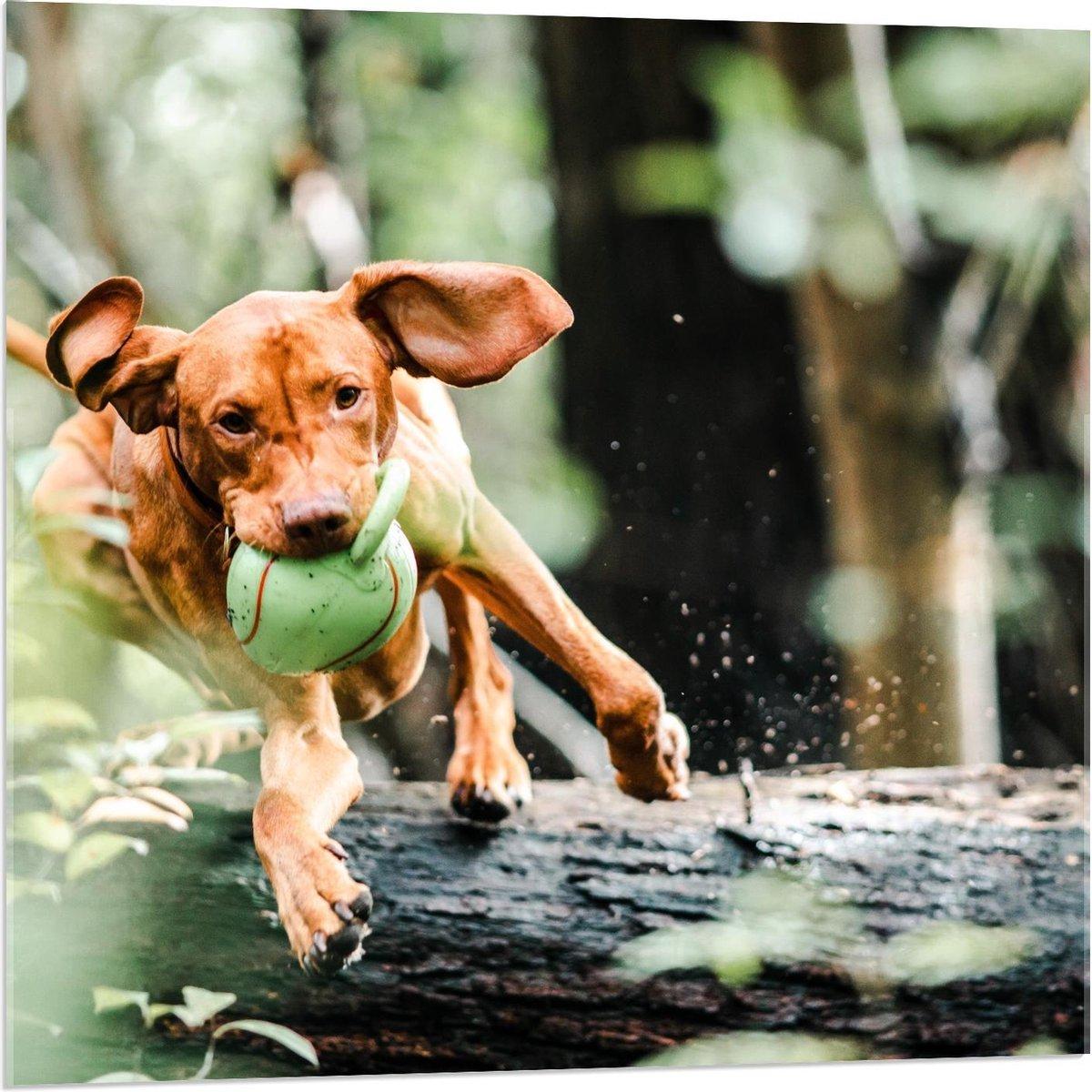 Plexiglas - Springende Hond over Boomstam met Speeltje - 80x80cm Foto op Plexiglas (Wanddecoratie op Plexiglas)