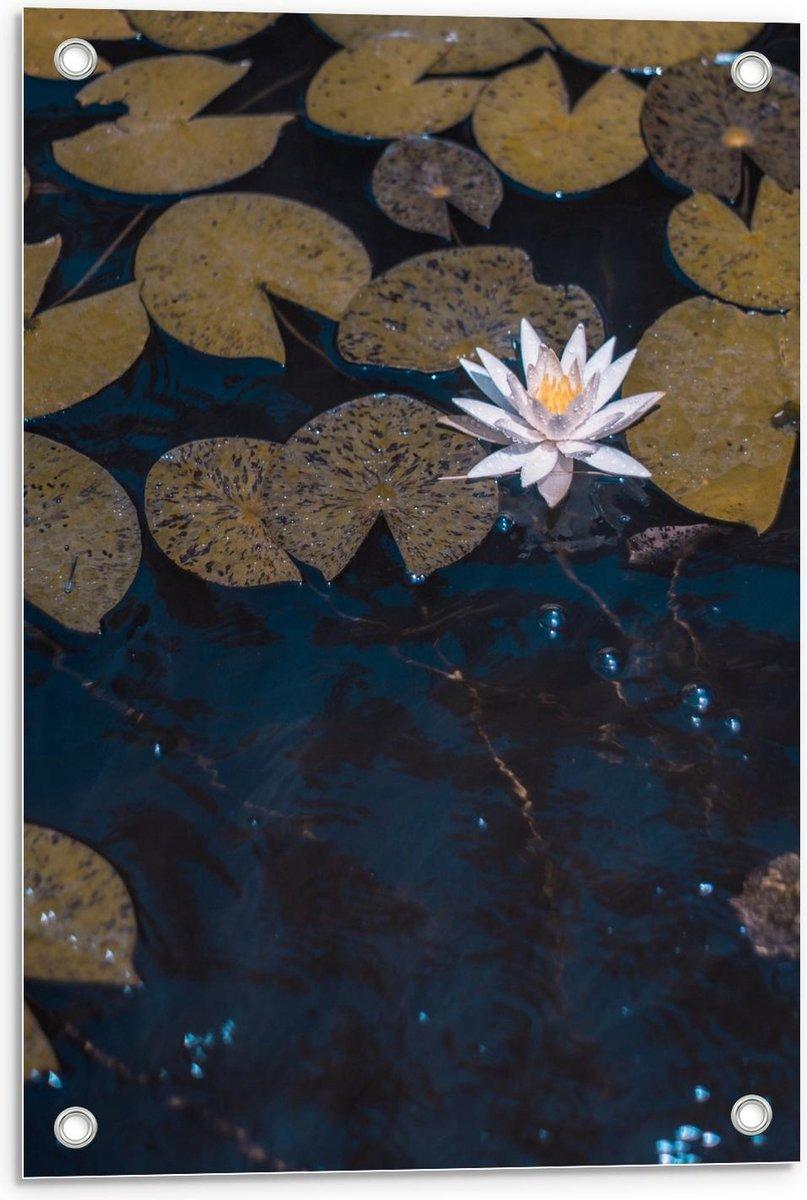 Tuinposter – Waterlelies - 40x60cm Foto op Tuinposter  (wanddecoratie voor buiten en binnen)