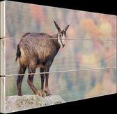 Geit op een rots  Hout 120x80 cm - Foto print op Hout (Wanddecoratie)
