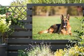 Duitse herdershond ligt op het gras Tuinposter 180x120 cm - Tuindoek / Buitencanvas / Schilderijen voor buiten (tuin decoratie) XXL / Groot formaat!