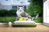 Fotobehang vinyl - Siamese kat breedte 380 cm x hoogte 265 cm - Foto print op behang (in 7 formaten beschikbaar)