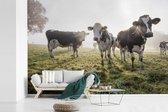 Fotobehang vinyl - Mistige ochtend bij de Friese koeien in het weiland breedte 390 cm x hoogte 260 cm - Foto print op behang (in 7 formaten beschikbaar)