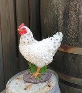 Kip beeldje staand – tuinbeelden kippen en kip decoratie | GerichteKeuze