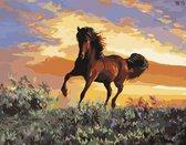 Eagle® Schilderen op Nummer Volwassenen - Prachtig Paard - Gespannen op Houten Frame - 50x40cm