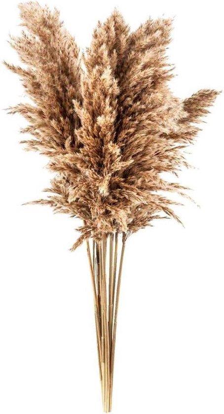 Pampas pluimen | 10 stuks | Pampasgras | Droogbloemen | 100 cm | Boeket decoratie pluimen | Luxury Living | Rietpluimen