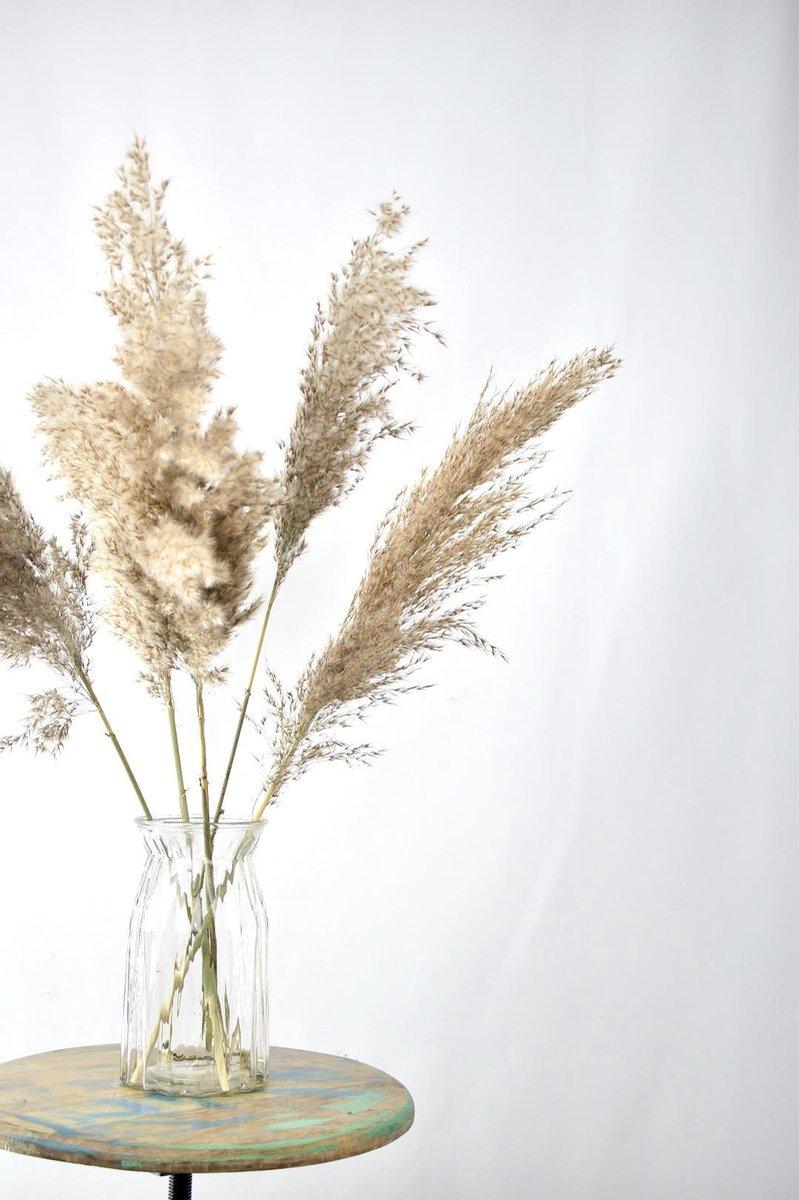 Pampas Pluimen - 5 stuks - Natuurlijk Bloemen - Droogbloemen   60 cm