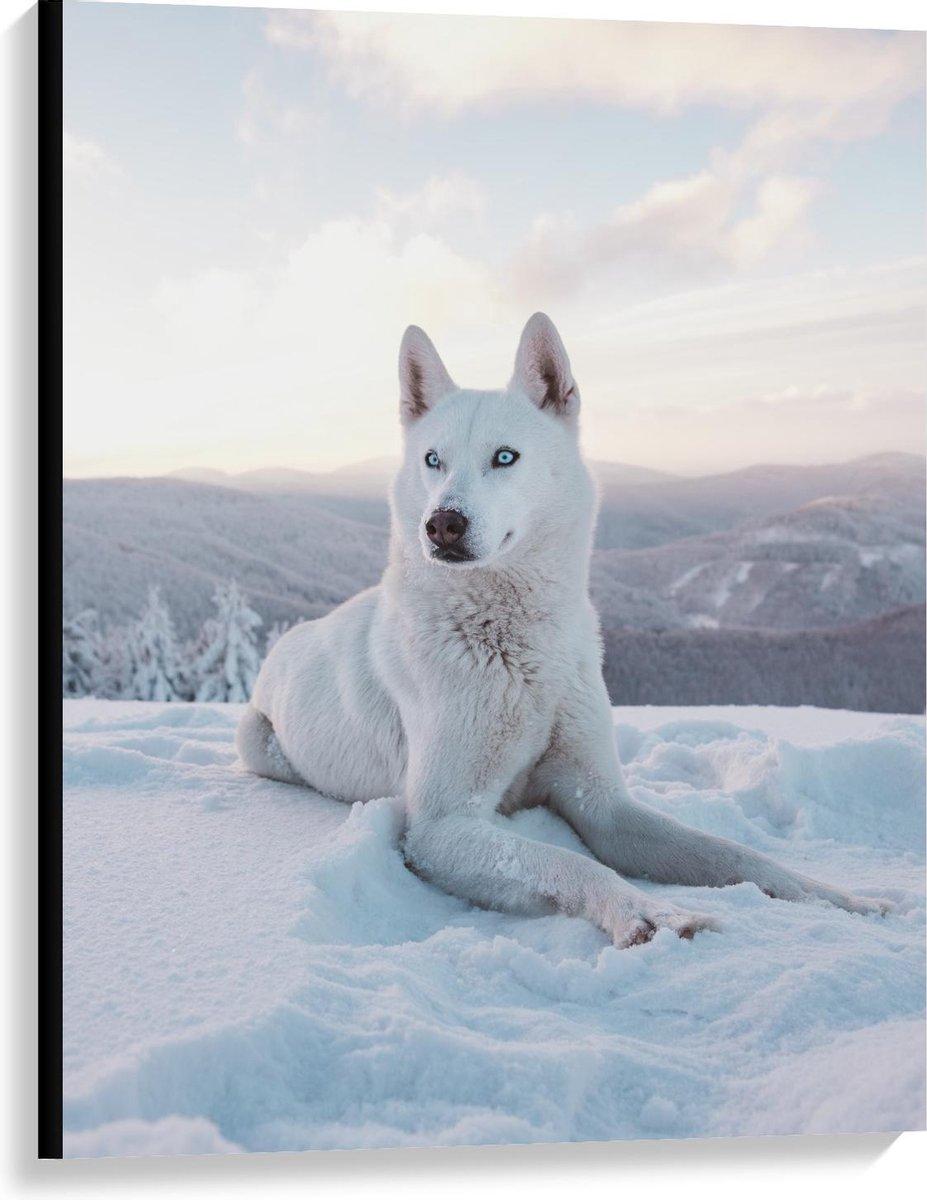 Canvas  - Witte Husky met Blauwe Ogen in de Sneeuw - 75x100cm Foto op Canvas Schilderij (Wanddecoratie op Canvas)