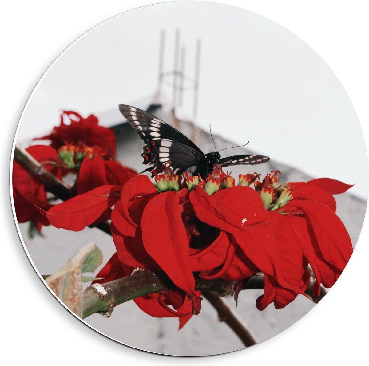 Forex Wandcirkel - Zwarte Vlinder op Rode Bloemen - 40x40cm Foto op Wandcirkel (met ophangsysteem)