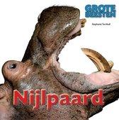 Grote Beesten  -   Nijlpaard