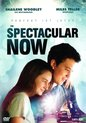 The Spectacular Now (import)