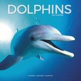 Dolfijnen Kalender 2021