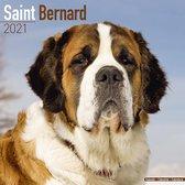 Sint Bernard Kalender 2021