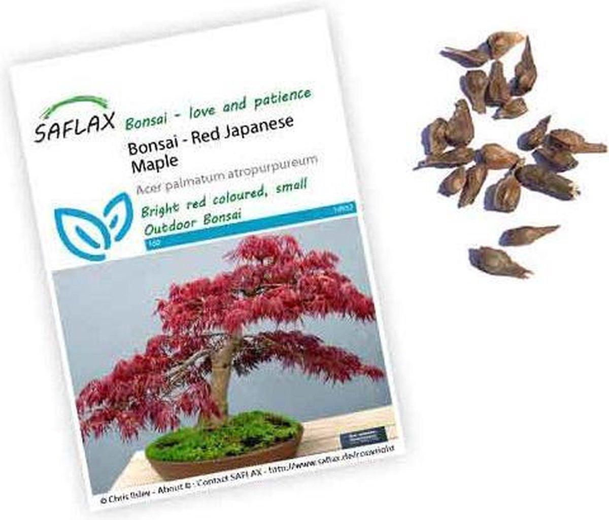 Bol Com Acer Palmatum Atropurpureum Zaden Japanse Esdoorn Bonsai