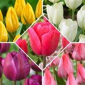 50x Bollenmix Tulipa - Tulpenbollen - Gemengde kleuren - 50 bloembollen