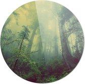 Bos | Wanddecoratie | 100CM x 100CM | Schilderij | Foto op plexiglas | natuur | Landschappen