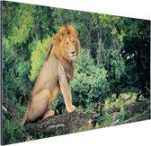 Leeuw zit op een tak Aluminium 120x80 cm - Foto print op Aluminium (metaal wanddecoratie)