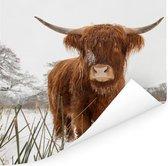 Schotse hooglander in de winter Poster 50x50 cm - Foto print op Poster (wanddecoratie woonkamer / slaapkamer) / Wilde dieren Poster