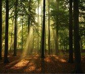 Bos zonnestralen Fotobehang XXL - 368 x 254 cm