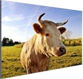 Koe in de natuur Aluminium 30x20 cm - klein - Foto print op Aluminium (metaal wanddecoratie)