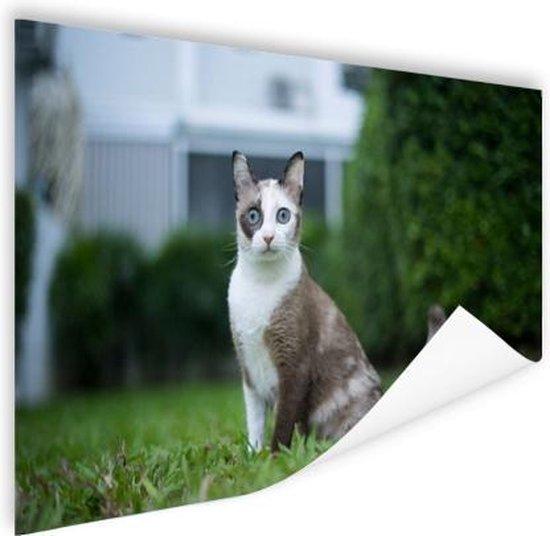 Bol Com Siamese Kat Poster 120x80 Cm Foto Print Op Poster Wanddecoratie Woonkamer