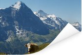 Zwitserse koe voor de Eiger in het Jungfrau-gebied Poster 90x60 cm - Foto print op Poster (wanddecoratie woonkamer / slaapkamer)