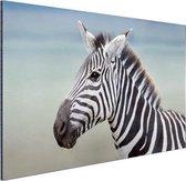 Zebra portret  Aluminium 120x80 cm - Foto print op Aluminium (metaal wanddecoratie)