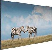 Verliefde zebras fotoafdruk Aluminium 120x80 cm - Foto print op Aluminium (metaal wanddecoratie)