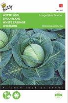 Witte Kool Langedijker Bewaar - Brassica oleracea - set van 10 stuks