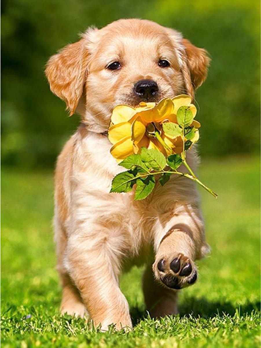 Diamond Painting Pakket Labrador Puppy met een bloem - Volwassenen - 25x30 cm - SEOS Shop ®