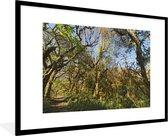 Poster met lijst Nationaal park Calilegua - De jungle in het nationaal park Calilegua met helderblauwe lucht in Argentinië - fotolijst zwart - 90x60 cm - Poster met lijst