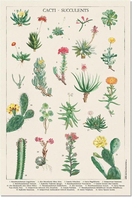 Cactussen poster -planten-natuur- groen -collage-retro-vintage 61x91.5cm